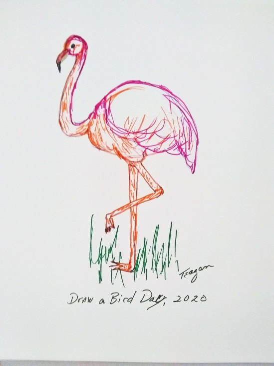 Draw a Bird Day Flamingo 2020