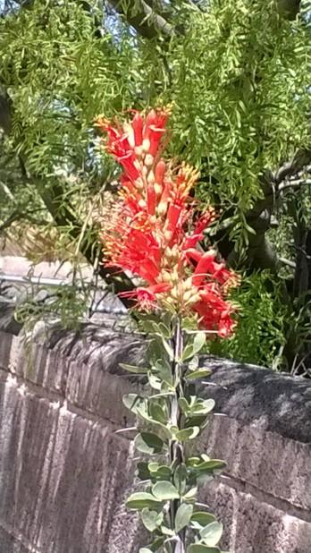Thorn bush flower close