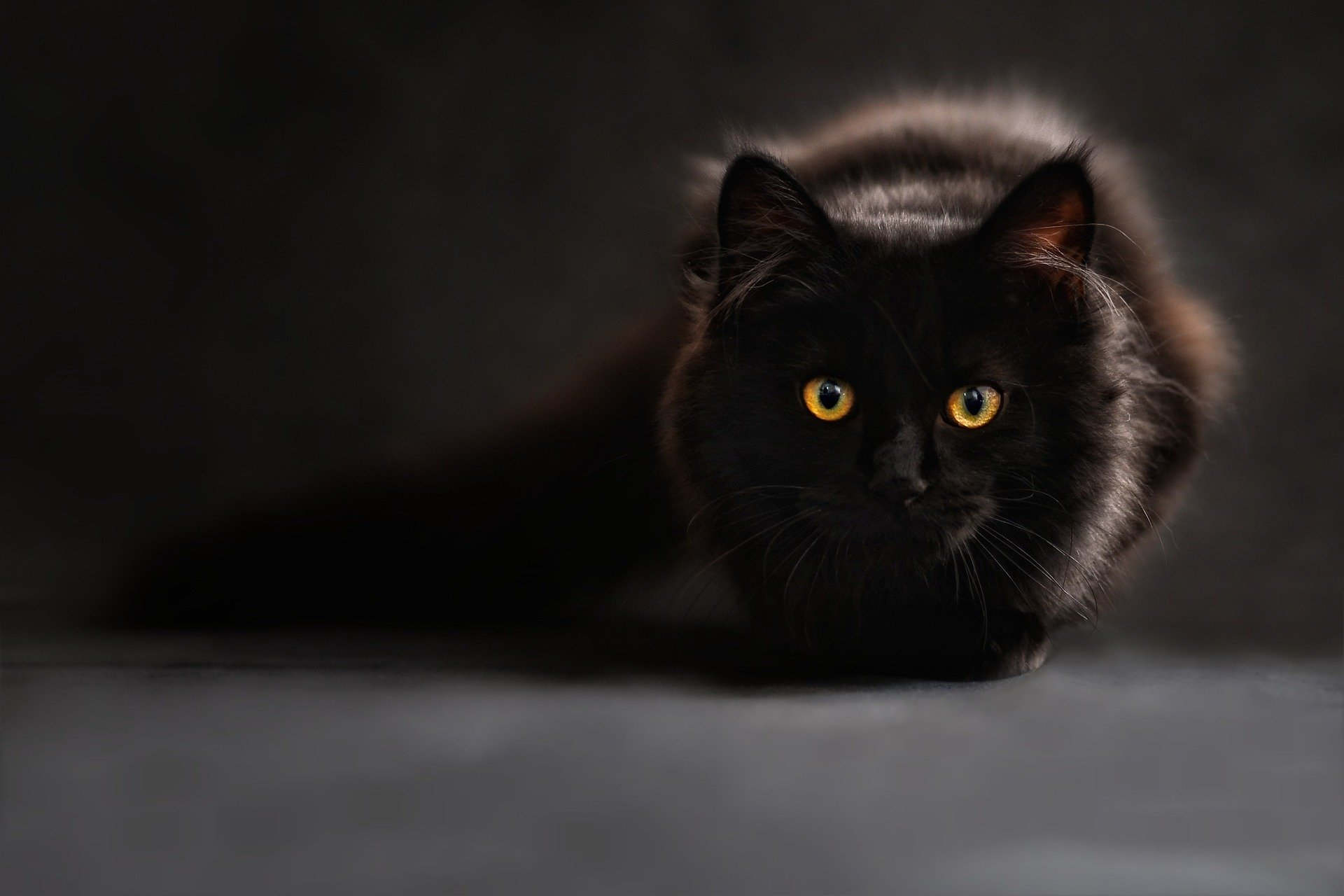 Black cat ready to pounce Claudia Wollesen Pixabay