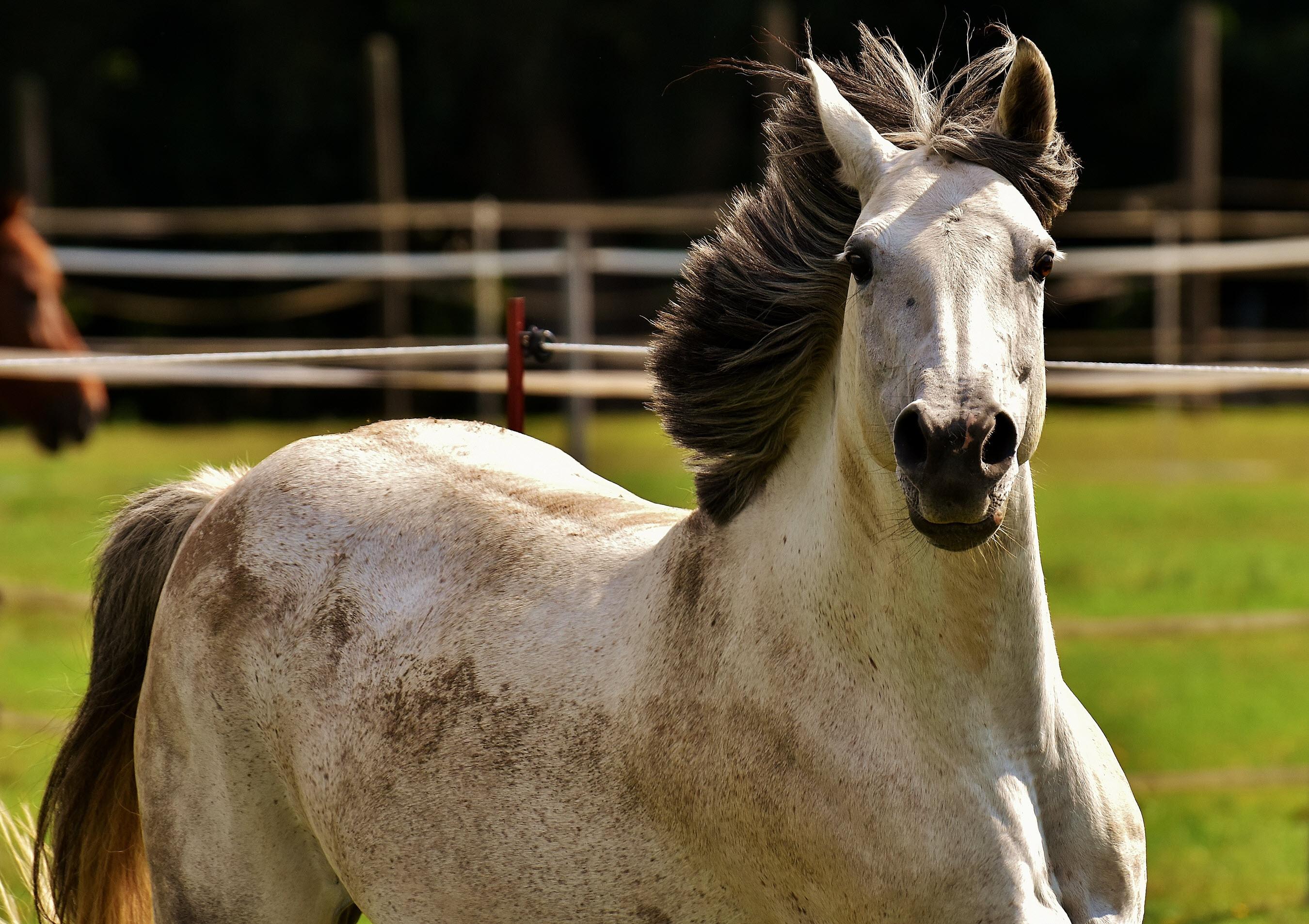 red Horse back facing dreamstime