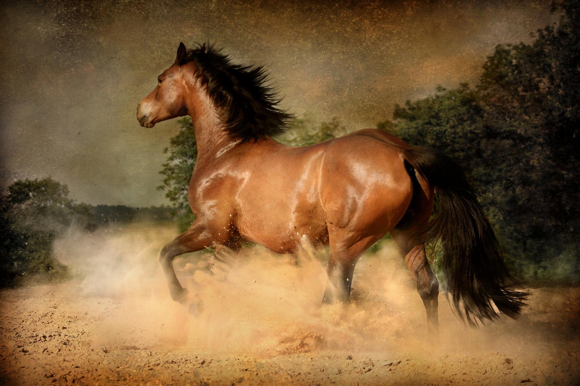 Horse black mane tail Dorota Kudyba Pixabay