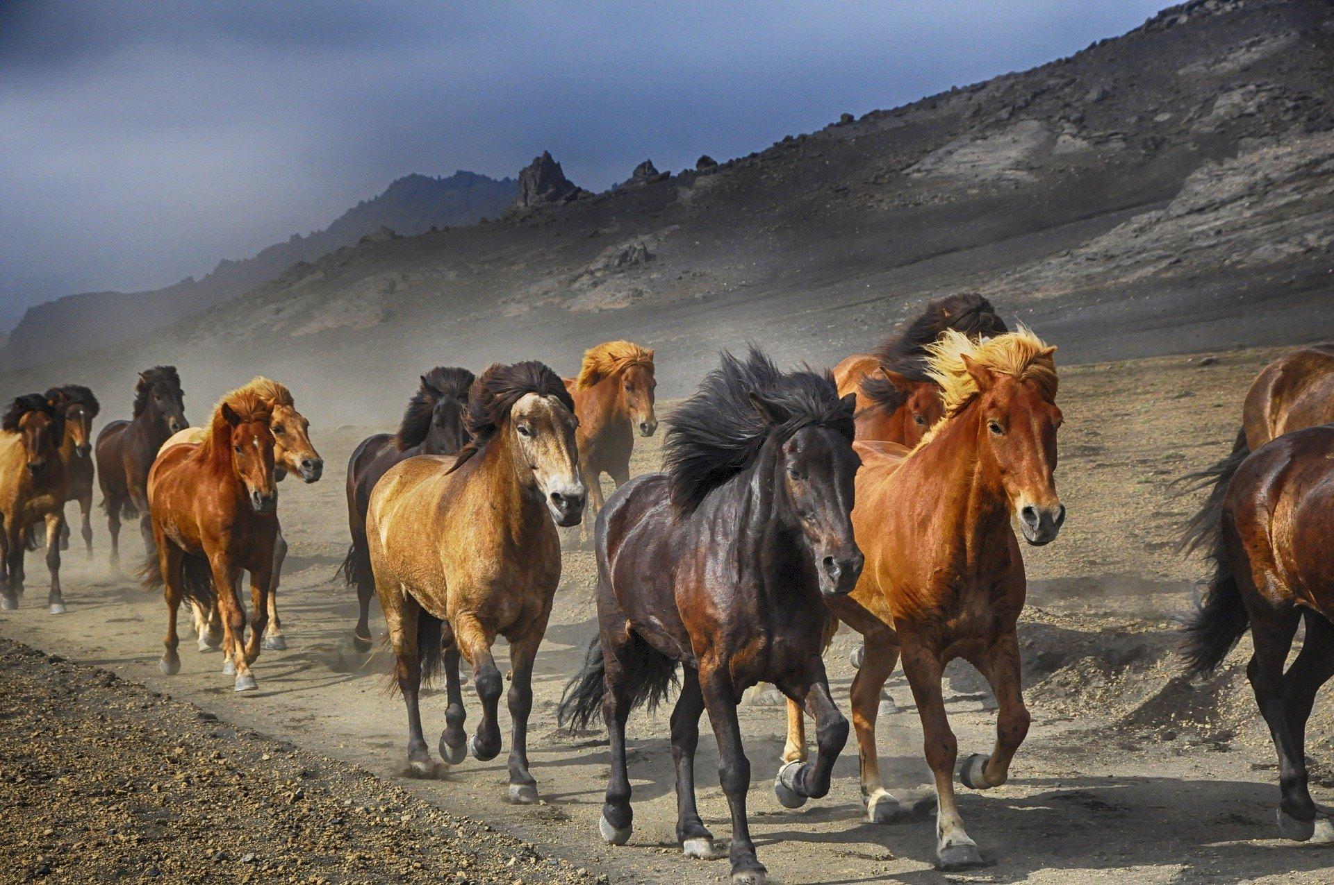 horses run stampede Pete Linforth Pixabay